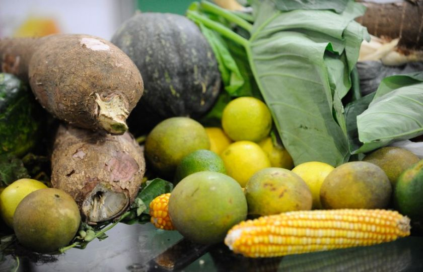 Conab compra 1,5 mil toneladas de alimentos da agricultura familiar