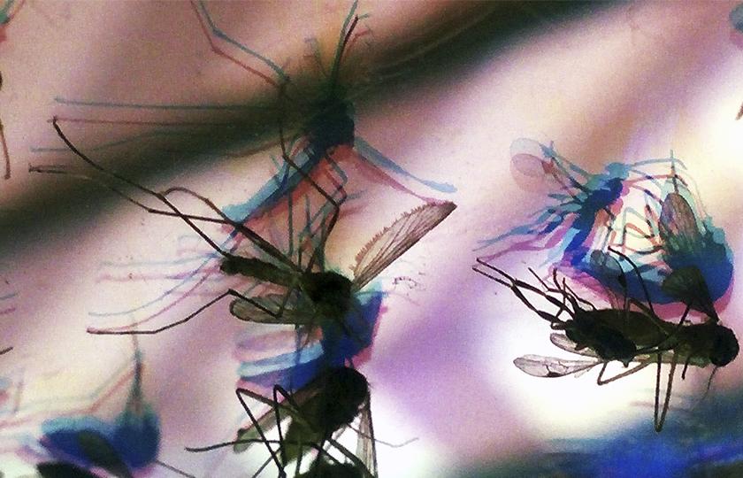 Epidemia do vírus Zika no Brasil completa um ano com desafio na área de pesquisa