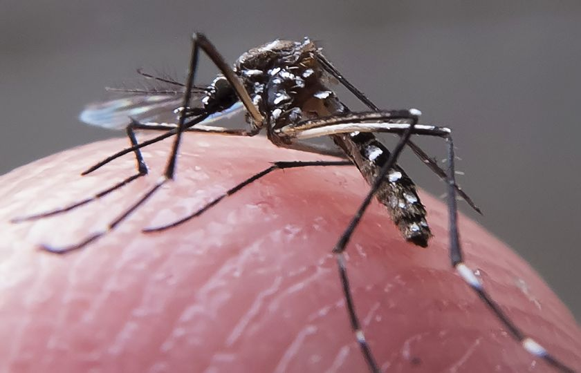 País registra queda nos casos de dengue, chikungunya e zika