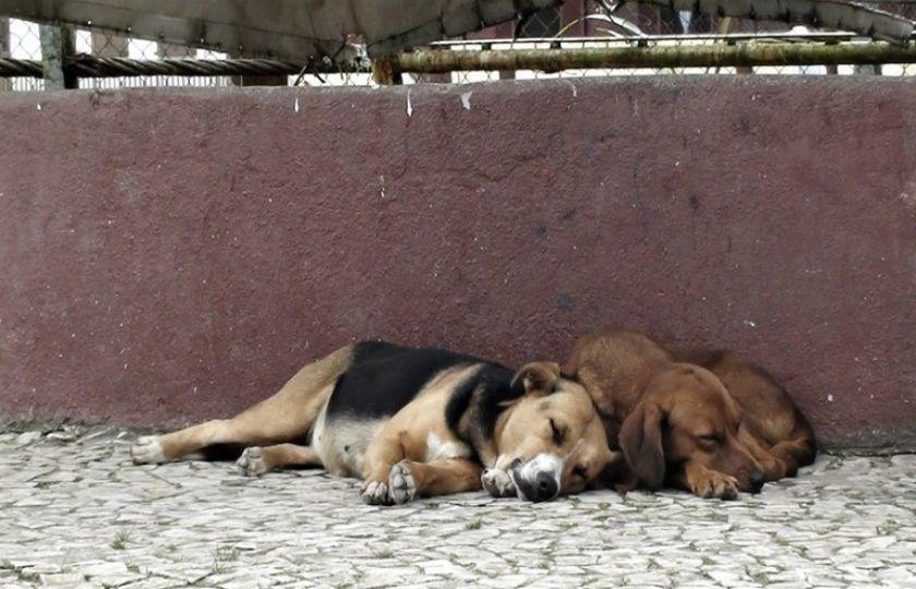 Prefeitura e ONGs unem forças para prestar apoio a animais abandonados em Santa Rosa